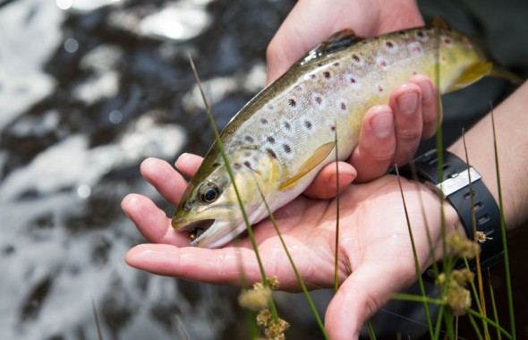 Fly-fishing-warburton-yarra-river-0E1A9013-590x380